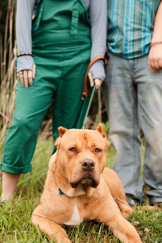 Hicks Family - Broemmelsiek Park - Brittany Lynn Imagery LLC - St Charles MO Photographer -24