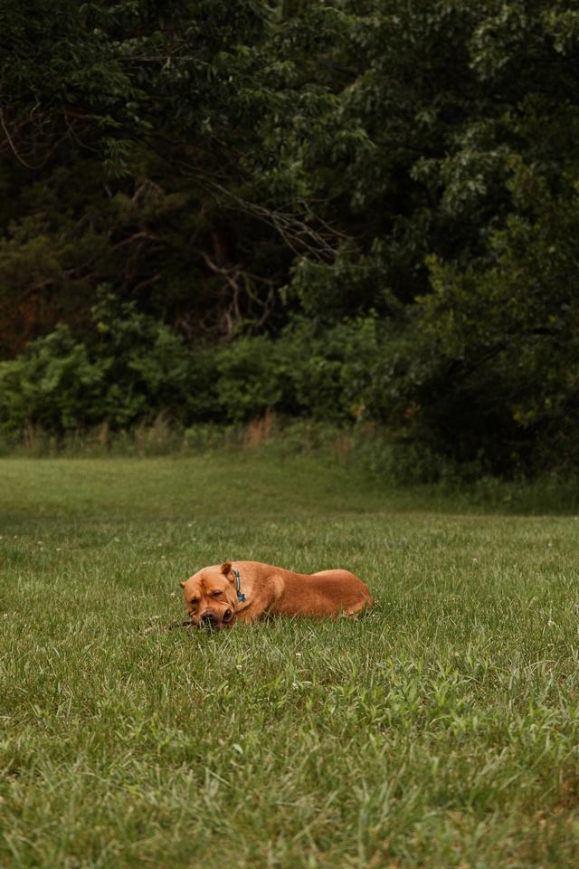 Hicks Family - Broemmelsiek Park - Brittany Lynn Imagery LLC - St Charles MO Photographer -90